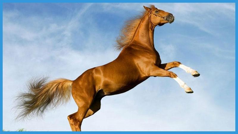 китайский календарь качества лошади