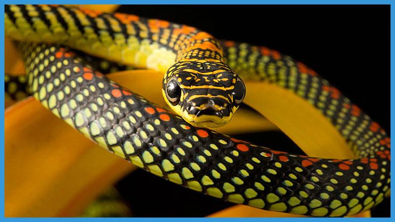 китайский календарь качества змеи