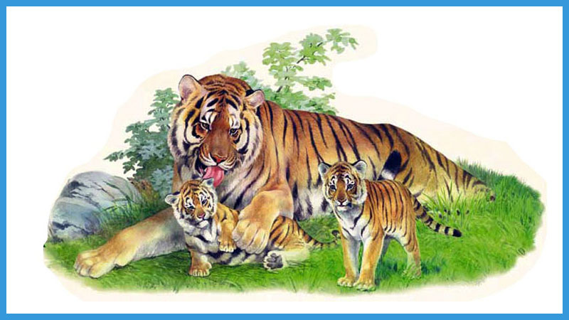 китайский календарь качества тигра